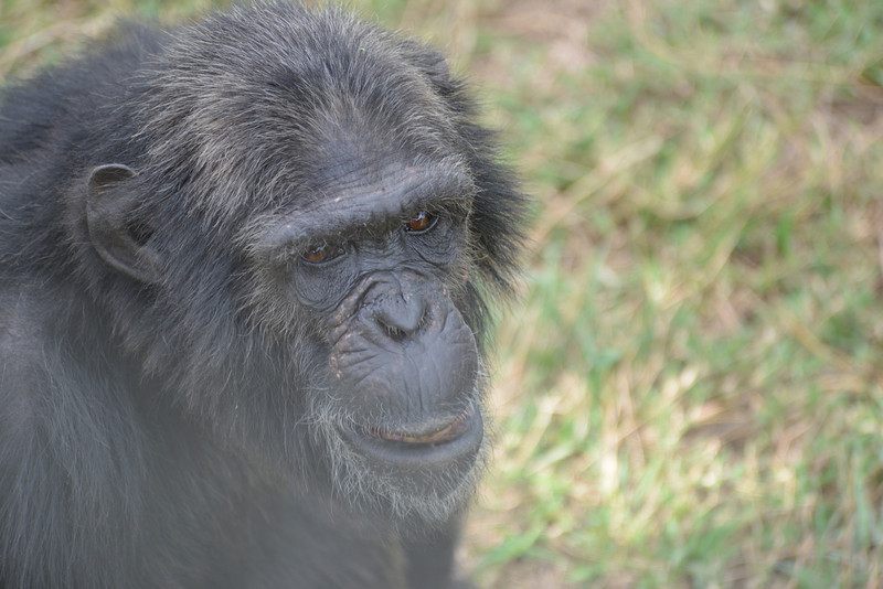 East Africa Safari 18.jpg