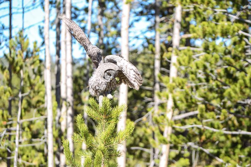Fall Trip Wyoming & Montana 2016 (109 of 193).jpg