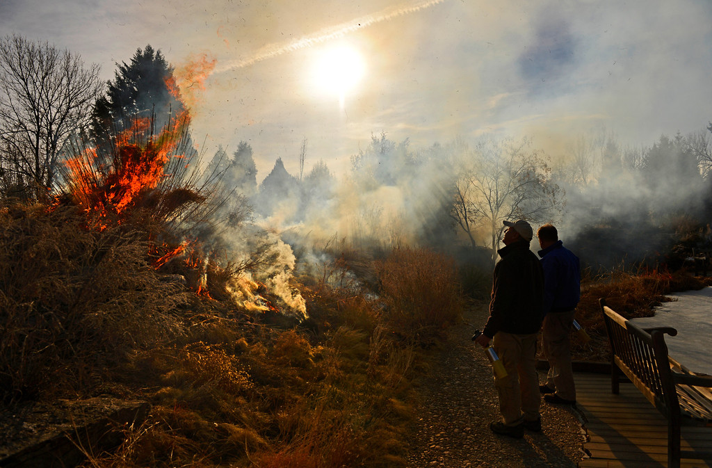 . DENVER, CO. - MARCH 07:  Dan Johnson, left, curator of the native plant collections at the Denver Botanic Gardens, and Nick Senakenberg, curator of tropical plants, watch a controlled burn of the Laura Smith Porter Plains Garden, March, 07, 2013. Fires are a natural part of the plains ecology and help balance the diversity of species. The burn will aid in the germination and growth of different species in the garden. (Photo By RJ Sangosti/The Denver Post)