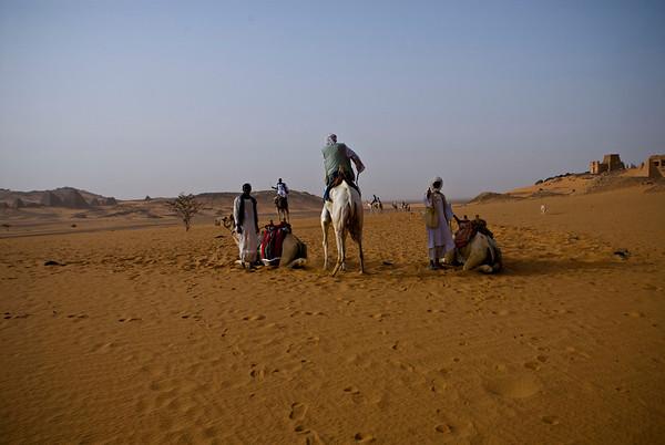 Meroe Camels