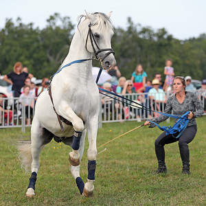 Herrmanns Royal Lipizzaners, September 16, 2017