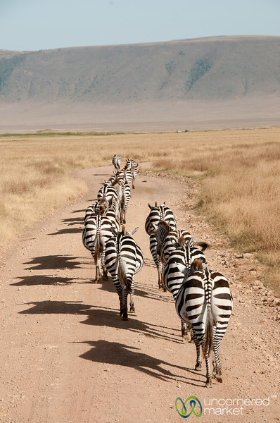 Following the Zebra Butts - Ngorongoro Crater, Tanzania
