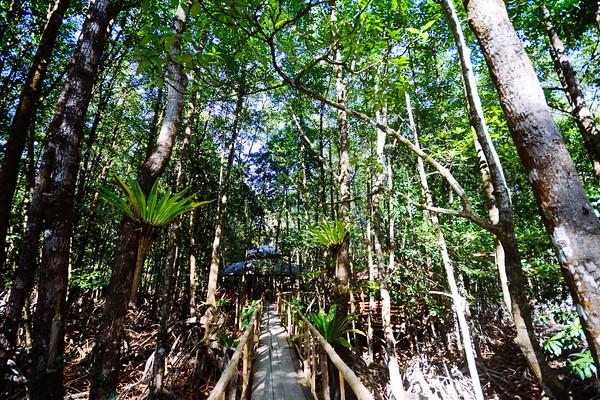 Wakat Wakat Mangroves