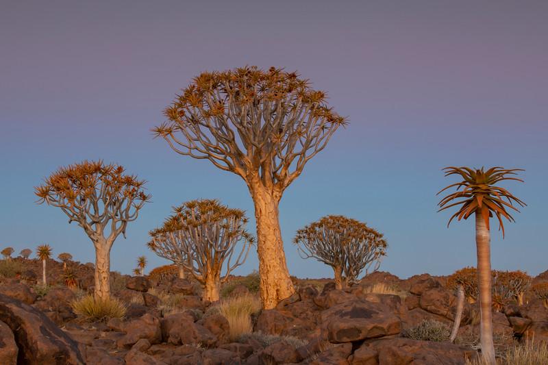 Namibia 69A3665.jpg