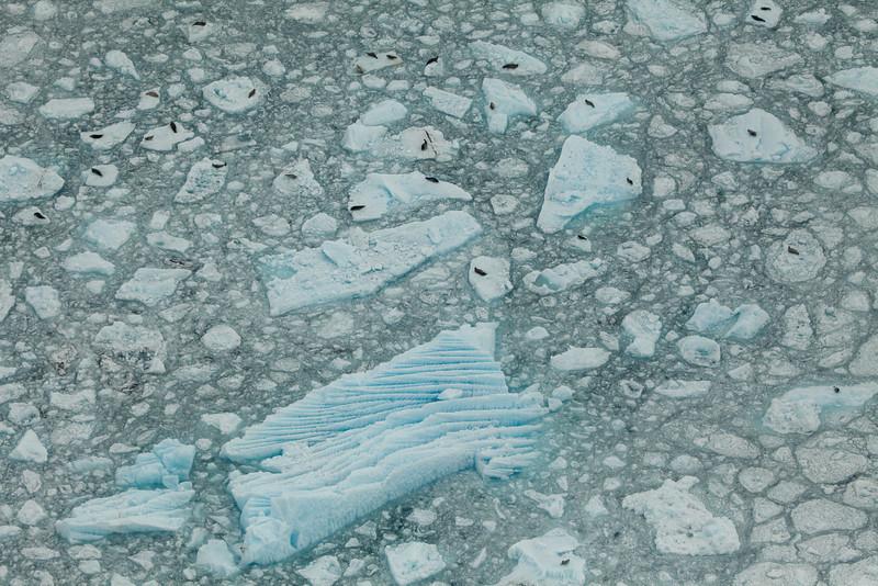Alaska Icy Bay-3918.jpg