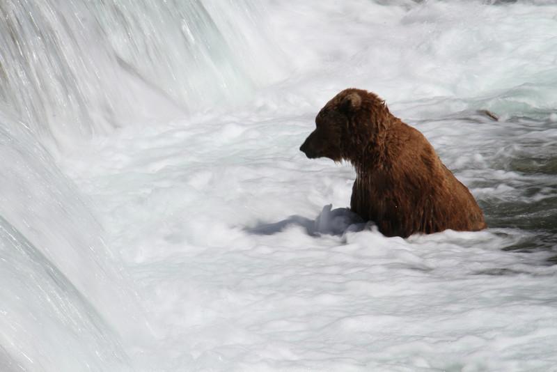 Katmai Bear7.jpg