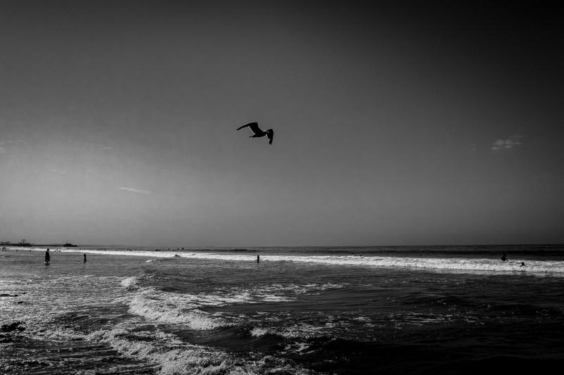 August 1 - Bird.jpg