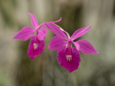 Výstava kvetoucí orchideje