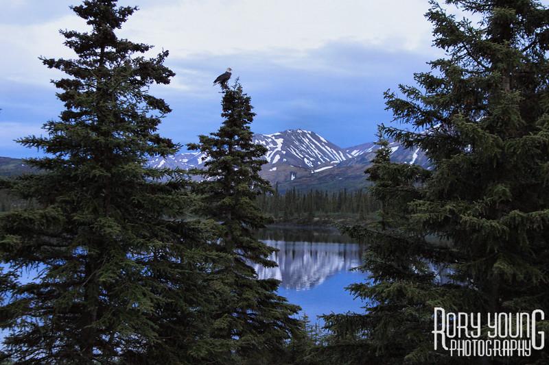 Alaska-G 1186.JPG
