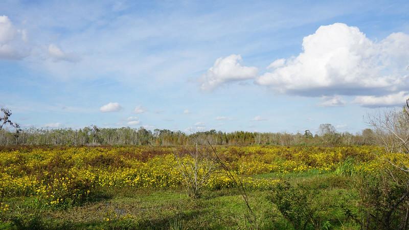 Wetlands in bloom