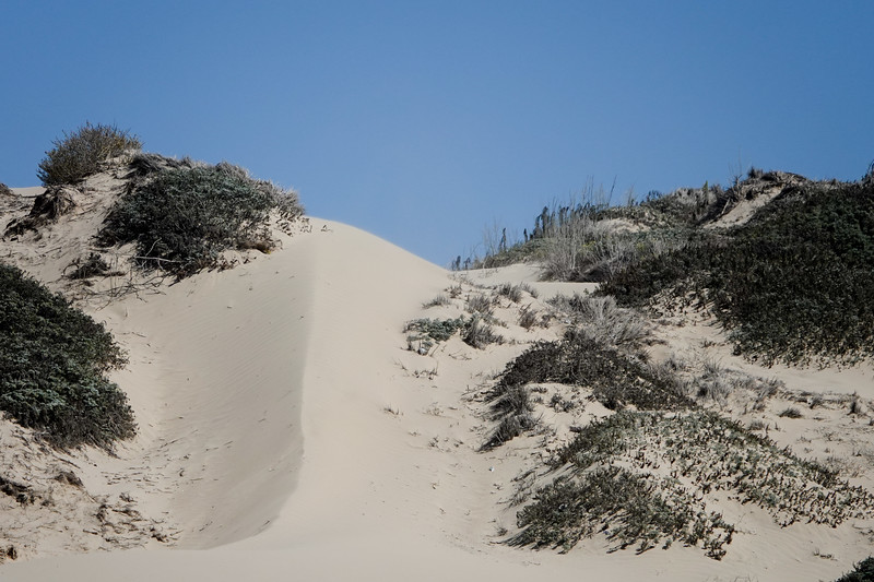 The nearby dunes in Oceana, where cars are allowed to drive on the sand.