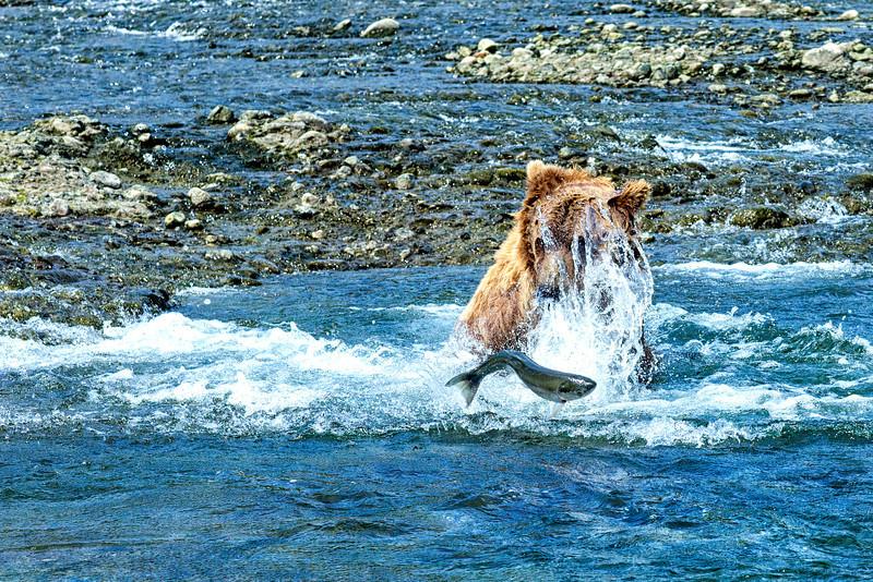 Alaska_2013_FH0T6983.jpg