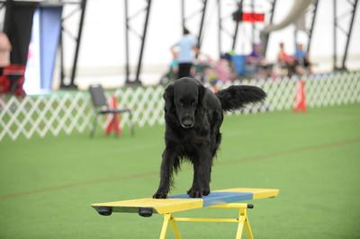 Berks County Dog Training Club AKC Agility Trial June 26-28