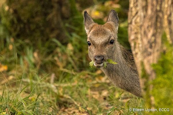 Killarney Deer Rut - 21/10/2018
