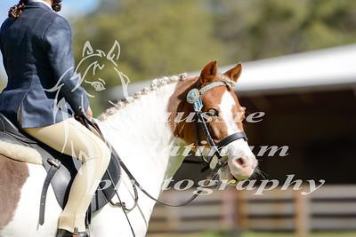Pony & Hack rings
