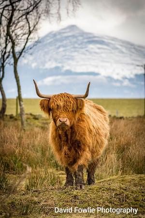 Moray & Aberdeenshire