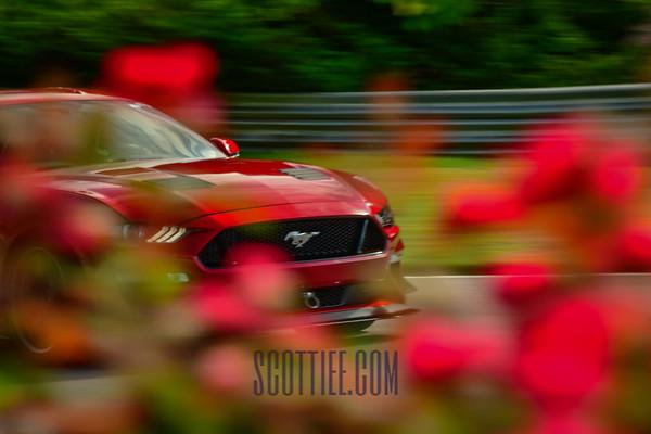 Mustang Red #121