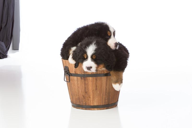 2013-Pearson Pups-Jun02-0407.jpg