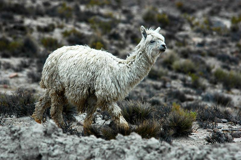 Peru Ecuador 2007-039.jpg