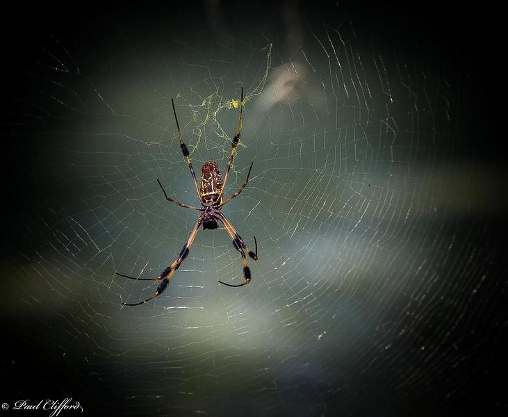 Spider 6748 C1.jpg