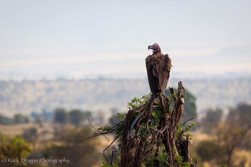 South_Serengeti-61.jpg
