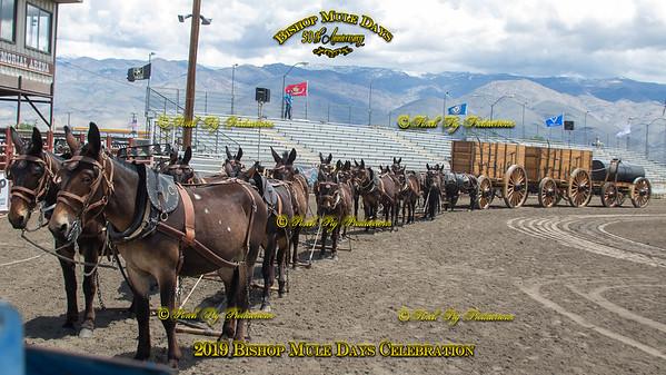 20 Mule