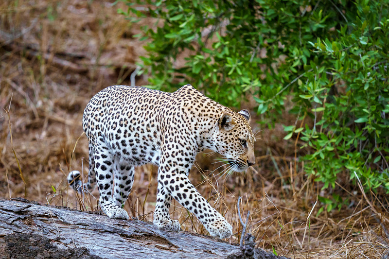 LeopardHills-20191029-2200.jpg