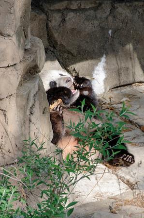 Pandas May 18 2014
