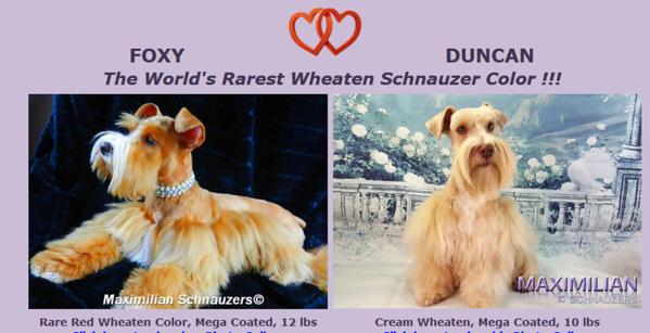 Foxy & Duncan Puppies, DOB 12/27/2017