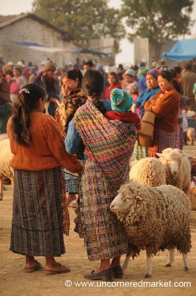 San Francisco El Alto Animal Market, Wooly Sheep - Guatemala