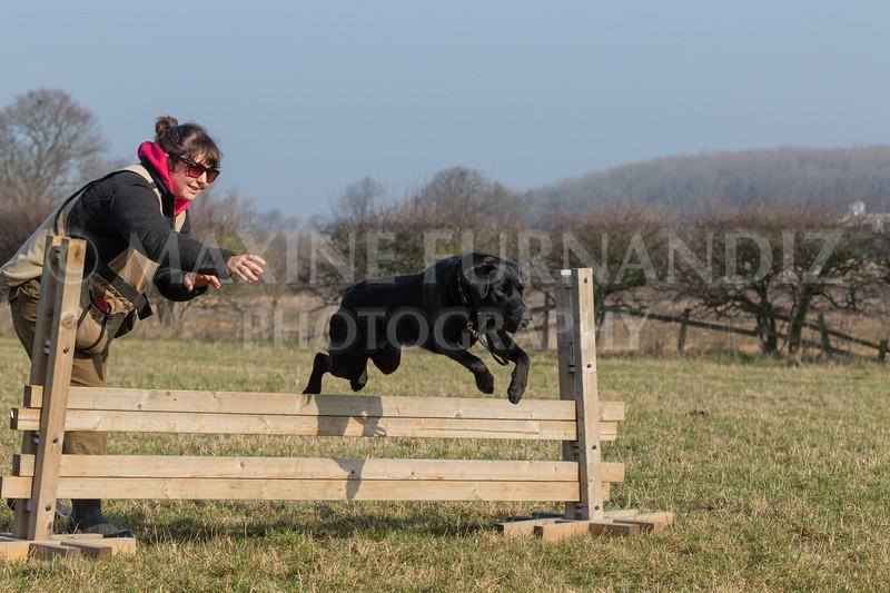 Dog Training Novice GD Feb2019-6007.jpg