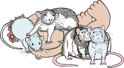 Using Baby Steps to Introduce Rats to Rats