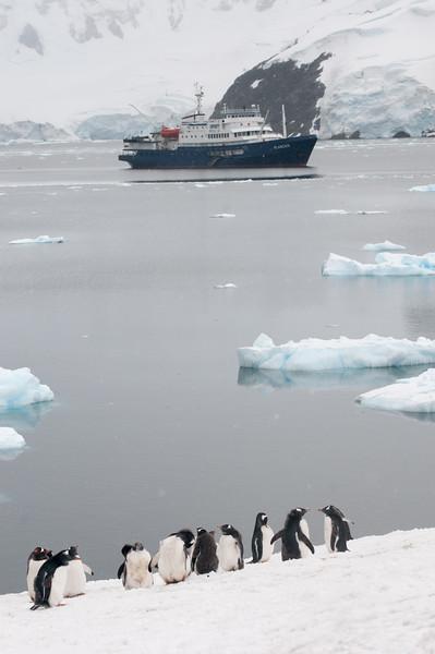 Antarctica 2015 (68 of 99).jpg