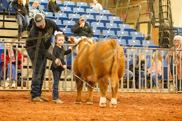 Mini Hereford Show