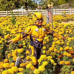 Uesugi Pumpkin Farm