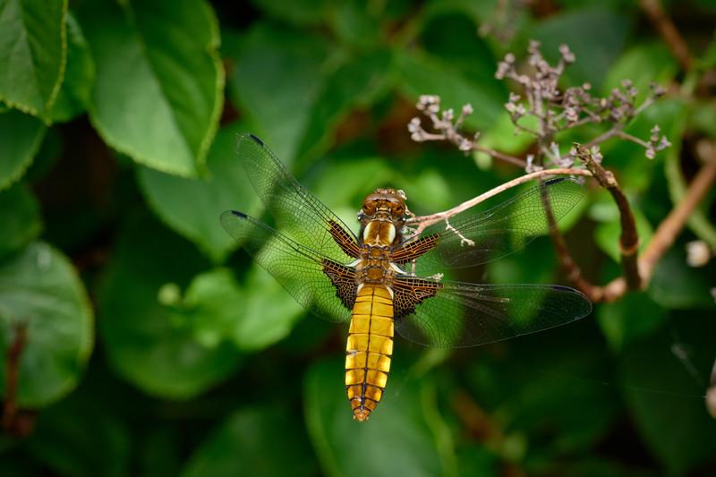 Garden Dragon-0198 - 9-37 am 1.jpg