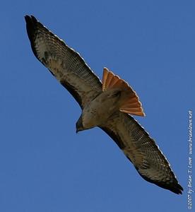 Birds -I