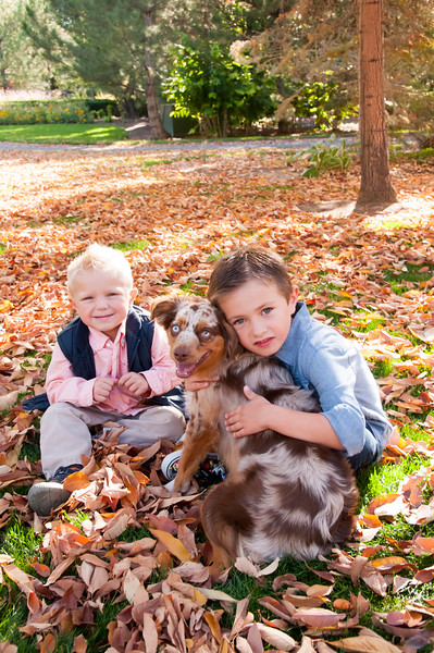 DogDays_Dogs_Gardens_2015_PIC_5852.jpg