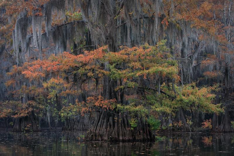 Cypress_Swamps_1117_PSokol-883-Edit.jpg