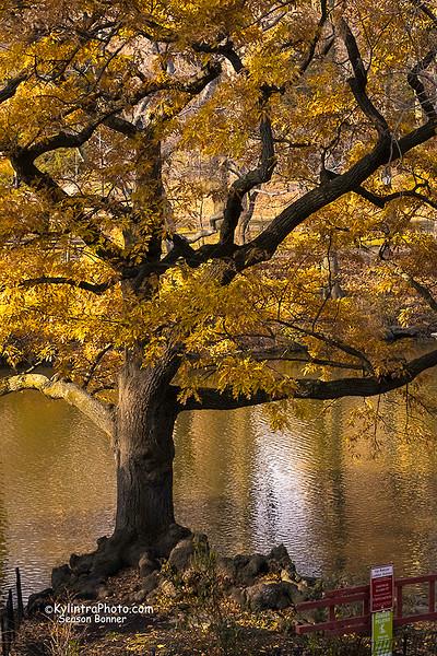Central Park, NY-1761a.jpg
