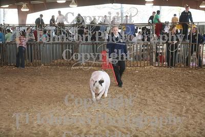 2011 Klein ISD Swine Show Class 3