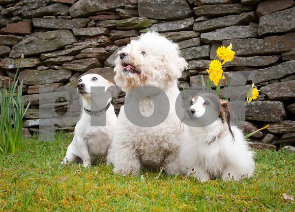 Lauder Dogs