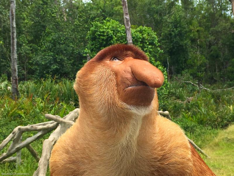 Proboscis Monkey, Saba, Malaysia