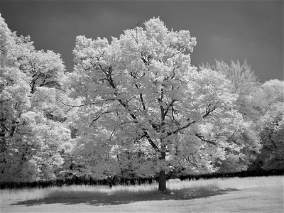 Infrared Photography Links