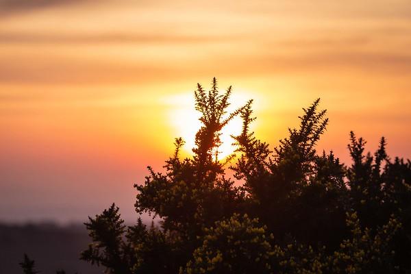 2019 - Ashdown Forest sunset 003