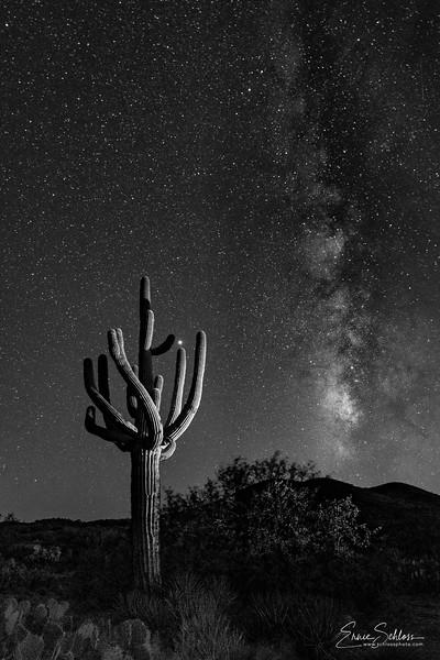 Saguaro & Milky Way III B&W 9-6-2018a-.jpg