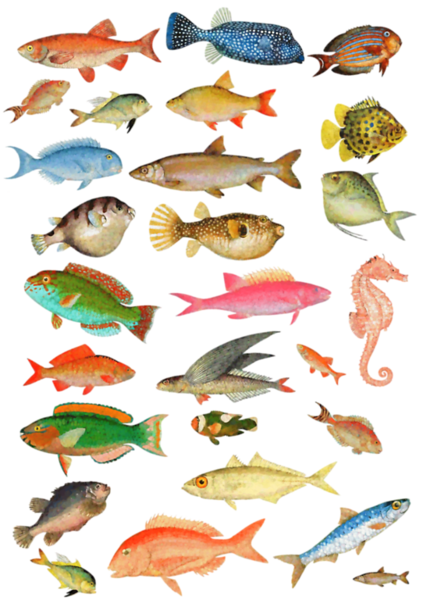 PLANCHEPOISSON2painting.png