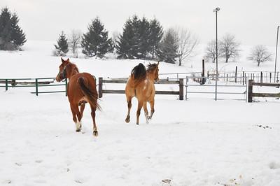 2010 Horses