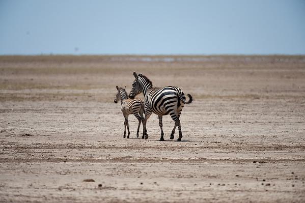 Kenya - Misc. Animals
