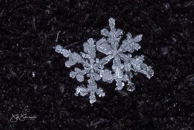 snowflakes-1335.jpg